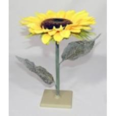 Модели цветков растений