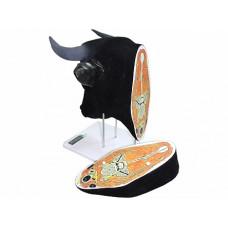 """Анатомический ветеринарный тренажер """"Голова коровы с ушами и топографией анатомических слоёв"""""""