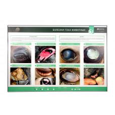 Интерактивный светодинамический стенд «Болезни глаз животных»