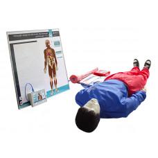 """""""Александр-01"""" тренажер-манекен взрослого пострадавшего для отработки приемов сердечно-легочной реанимации  (голова, туловище, конечности) с контроллером и настенным табло"""