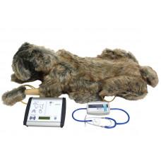 Тренажер для проведения сердечно-легочной реанимации у собак