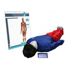 """""""Игорь-02"""" манекен-тренажер взрослого пострадавшего для отработки приемов сердечно-легочной реанимации (голова, туловище, конечности) с беспроводным планшетным компьютером и настенным анатомическим табло"""