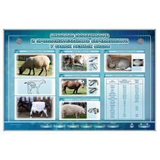 Интерактивный светодинамический стенд   «Видовые особенности и продолжительность беременности у самок разных видов»